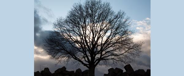 Peaceful tree.