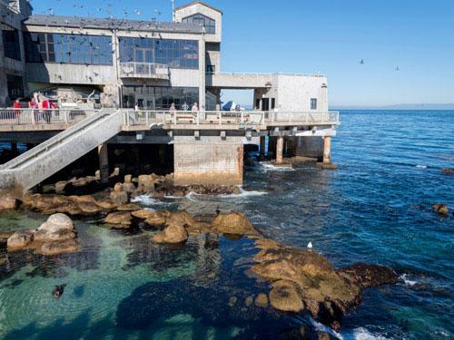 Image courtesy of Monterey Bay Aquarium.