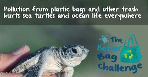 Image courtesy of http://www.worldoceansday.org/